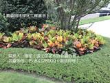 蜀森园林绿化工地展示